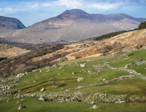 Sheep Pastures, Ring of Kerry