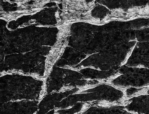Mineralization, Concrete Wall, St. Louis, Missouri, 1998